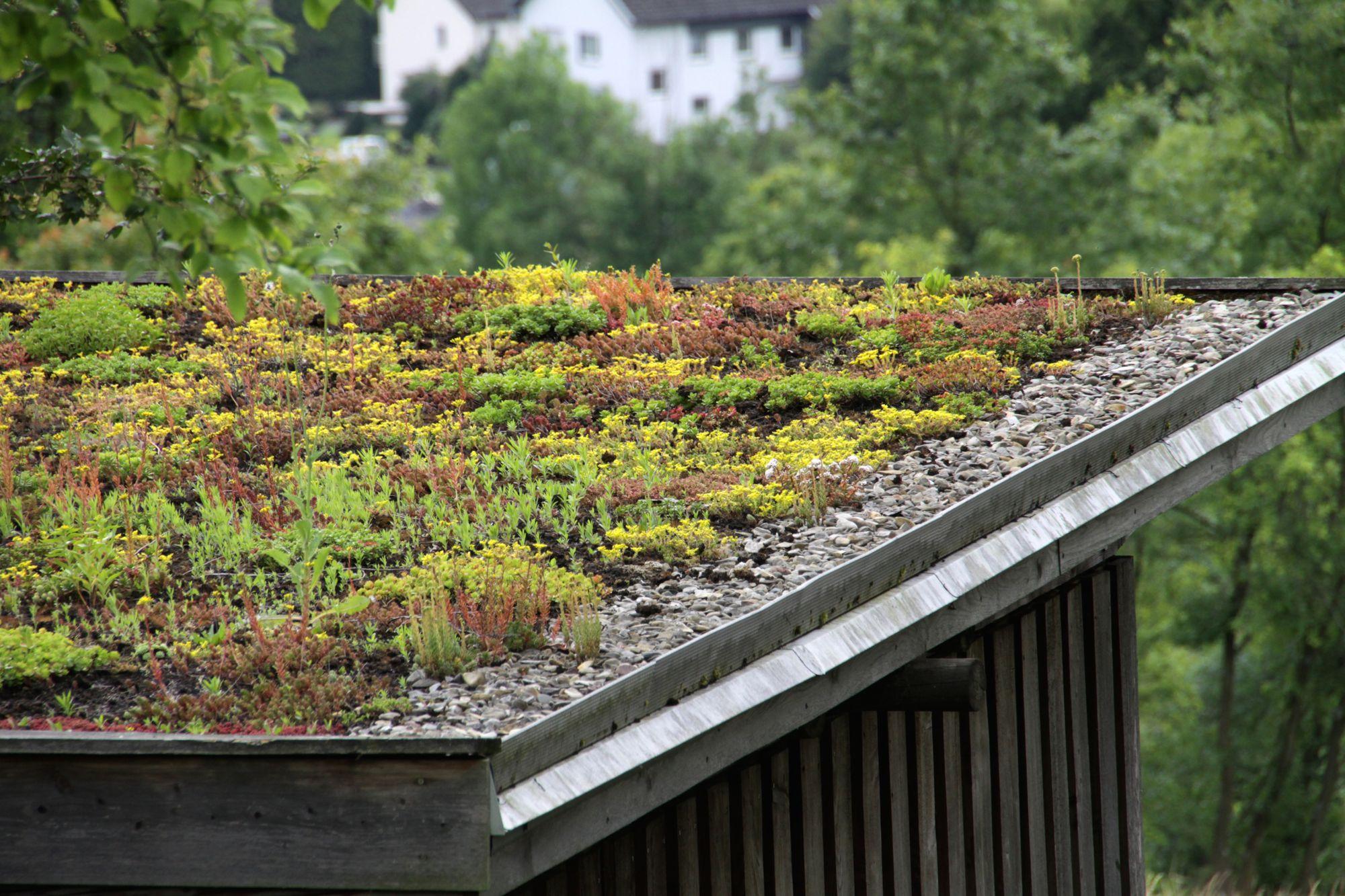 green-roof-installation